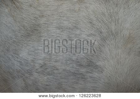 a horse fur close up, fur, background, hair, animal