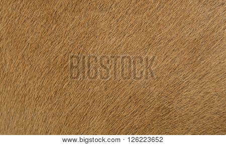 a horse fur close up. fur, background, hair, animal,