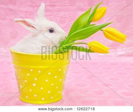 Rabbit And Yellow Tulips
