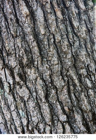 Close up photo of a tree bark texture
