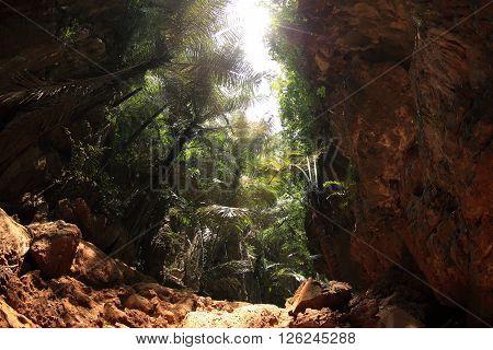 closeup of sunbeam at tropical forest landscape