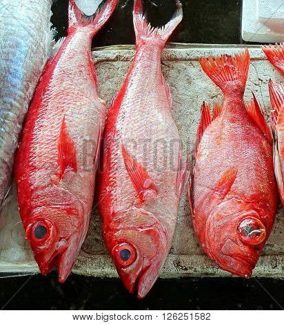 Large red snappers for sale at the fish market