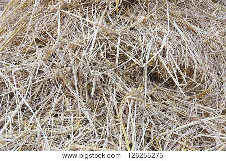 stack straw or haystack for nature abstract background.