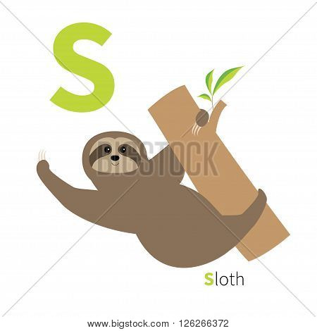 Letter S Sloth hanging on tree Zoo alphabet. English abc with animals Education cards for kids Isolated White background Flat design Vector illustration