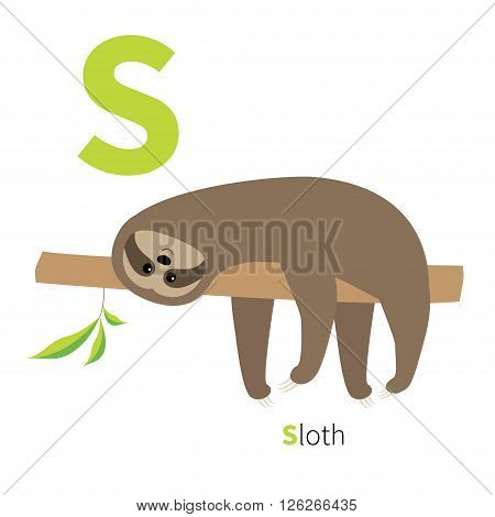 Letter S Sloth English abc with animals Zoo alphabet. Education cards for kids Isolated White background Flat design Vector illustration
