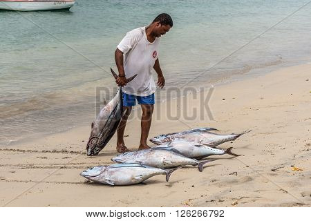 Tamarin Mauritius - December 8 2015: Fisherman dragging two tuna on the beach of Tamarin Bay in Mauritius.
