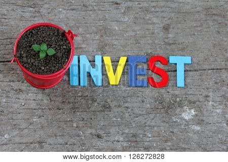 Sprout grow inside little red pail with word INVEST on its side. Concept of growing investment,risk and future.