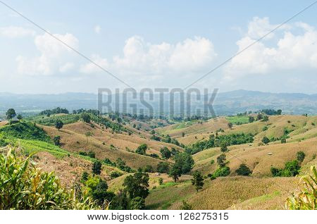 Corn field on the mountain and blue sky in nan thailand