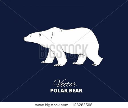 Polar bear hand drawn illustration. Walking or stranding polar bear, side view. Vector sketch.