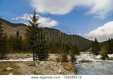 Landscape With A River Flowing Through A Pine Forest In The Mountains