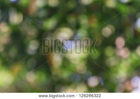 Glow Light Blow Natural Green Tree Bokeh Wonderful Dreamy Background