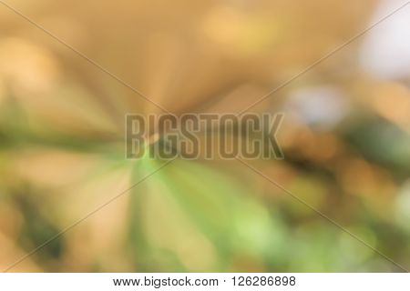 Wonderful Fantasy Mood Abstract Sweet Nature Green And Earth Colour Tone Spring Background