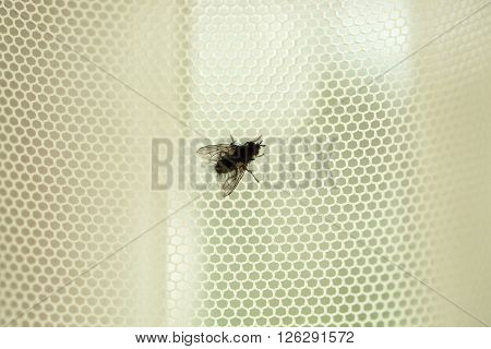 A macro shot of fly on a white background. Live house fly. Insect close-up