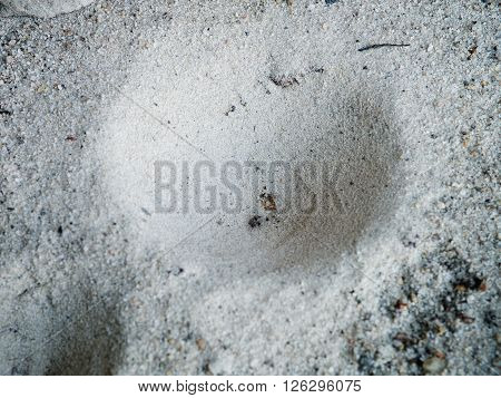 Ant Lio Hiden In Dimple, Insect Trap In The Sand