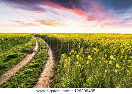 Country way on yellow field of rape