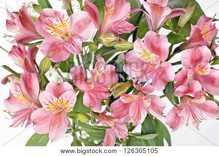 Bouquet of alstroemeria flowers on a white background close-up