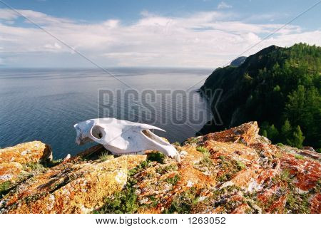 Skull On Baykal Coast.