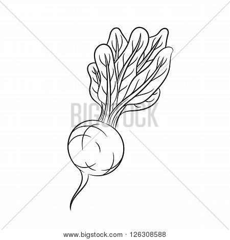 Radish. Vector hand drawn radish illustration isolated on white background - stock vector