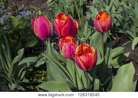Tulip spring flower bouquet green white easter nature blossom fresh.