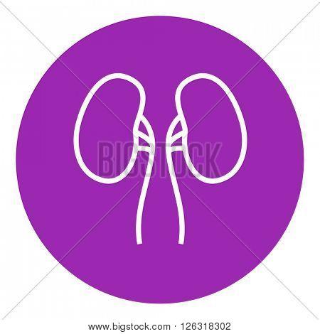 Kidney line icon.