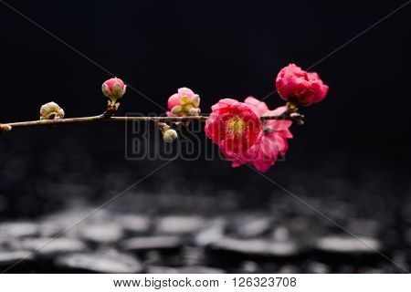 Set of, sakura flowers with therapy stones