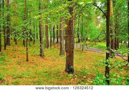 Thick deciduous forest with deserted pathway in cloudy weather. Summer landscape soft filter applied.