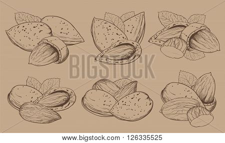 Almond on light brown background. Almond seeds. Engraved raster illustration of leaves and nuts of Almond. Isolated almond.