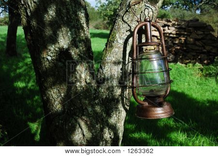 Kerosene Lamp On A Tree