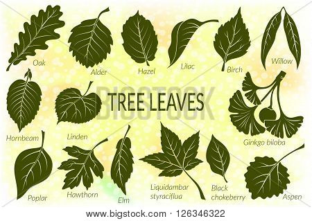 Pictograms Set, Tree Leaves, Oak, Willow, Liquidambar, Hawthorn, Poplar, Aspen, Hazel, Ginkgo Biloba, Elm, Birch, Alder, Linden, Hornbeam, Chokeberry and Lilac. Eps10, Contains Transparencies. Vector