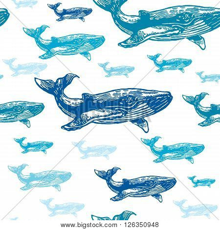Whale colourful seamless vector pattern. Realistic engraved style of whale animals on white background.