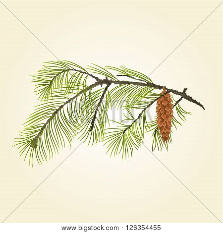 Pine branch Eastern White pine vector illustration