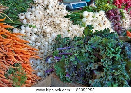 Fresh carrots, onions, and cabbage for sale at the farmer's market.