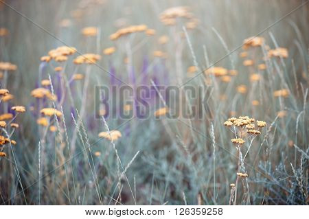 Close-up photo of the field grass and flowers during spring season