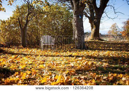 Single abandoned chair in autumn sun in a garden