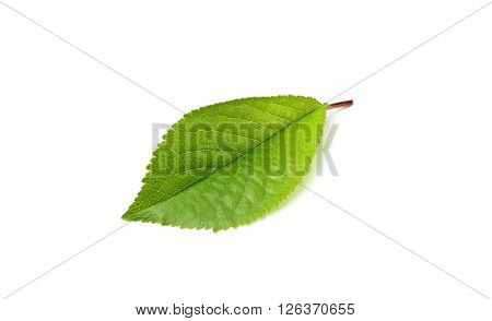 Leaf cherry closeup isolated on white background.
