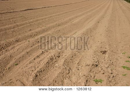 Ploughed Furrows In Field