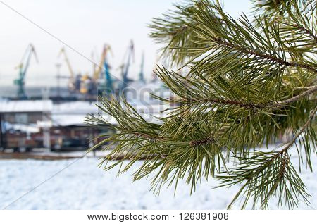 Branch Of A Pine On Blurred Background Industrial Landscape