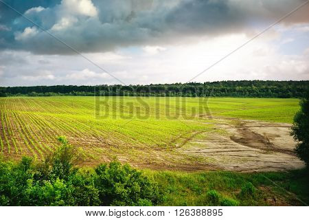 Green field of spring grass and forest, tree in front