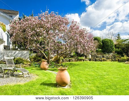 Spring english garden with blossoming magnolia tree. Sunny day. Blue sky