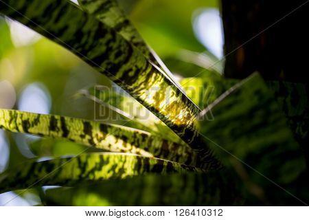 Green Pattern Leaf in the Sun Light