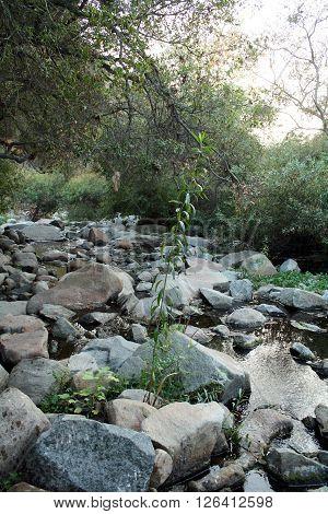 Small Mountain River Rocks (river rocks sitting in still water)