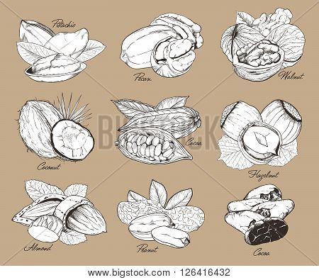Isolated nuts on brown background. Engraved bitmap illustration of leaves and nuts of pistachio, pecan, walnut, coconut, cocoa, hazelnut, almond, peanut. Set of mixed nuts.