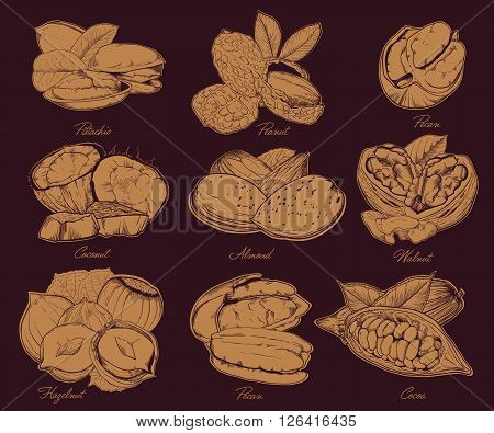 Isolated nuts on dark background. Engraved bitmap illustration of leaves and nuts of pistachio, pecan, walnut, coconut, cocoa, hazelnut, almond, peanut. Set of mixed nuts.