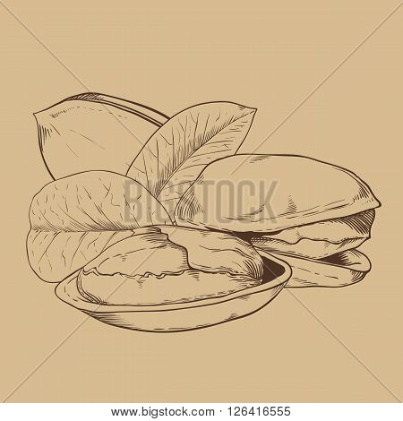 Pistachio bitmap isolated on brown background. Pistachio seeds. Engraved bitmap illustration of leaves and nuts of pistachio. Pistachio in vintage style.