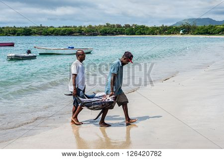 Tamarin Mauritius - December 9 2015: Fishermen carry two tuna on the beach of Tamarin Bay in Mauritius.