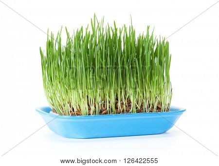 Homegrown green grass. Isolated on white background