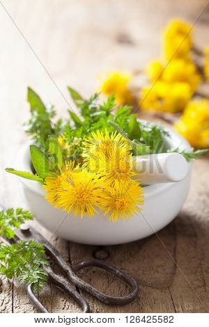 coltsfoot flowers spring herbs in mortar