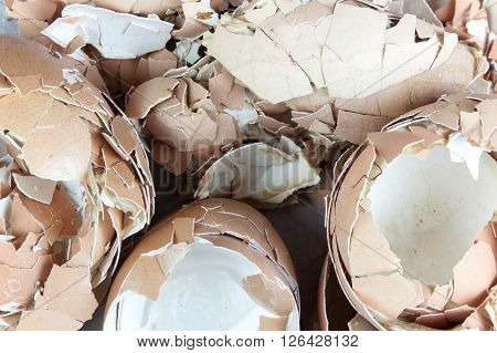 egg shell many lot a creaked fracture