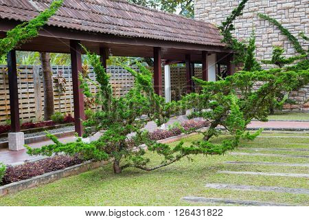 Ornamental shrubs thuja in the park, Asia