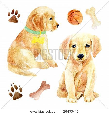 Labrador retriever puppy set. Two puppies with toys. Hand painted dogs watercolor illustration isolated on white backgroun
